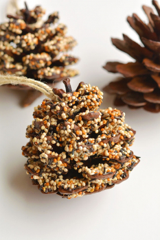 Feed The Birds! How To Make A Pine Cone Bird Feeder With The Children This Summer School Holiday